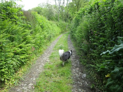 A377 dog-friendly pub and dog walk, Devon - Driving with Dogs