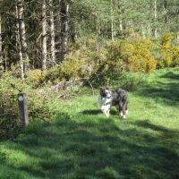 A dog walk in the Forest near Dunwich, Suffolk