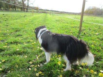 A417 dog-friendly pub and dog walk near Wantage, Oxfordshire - Driving with Dogs