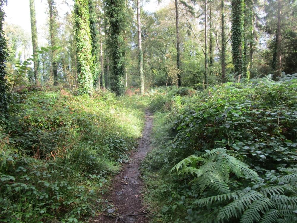 A487 dog walk near Aberystwyth, Ceredigion, Wales - IMG_5979.JPG