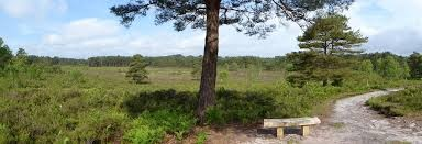 A31 country park dog walk and cafe near Bournemouth, Dorset - avonheathcountry park.jpg