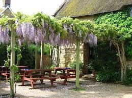 A303 dog-friendly refreshments and dog walk near Ilminster, Somerset - Driving with Dogs