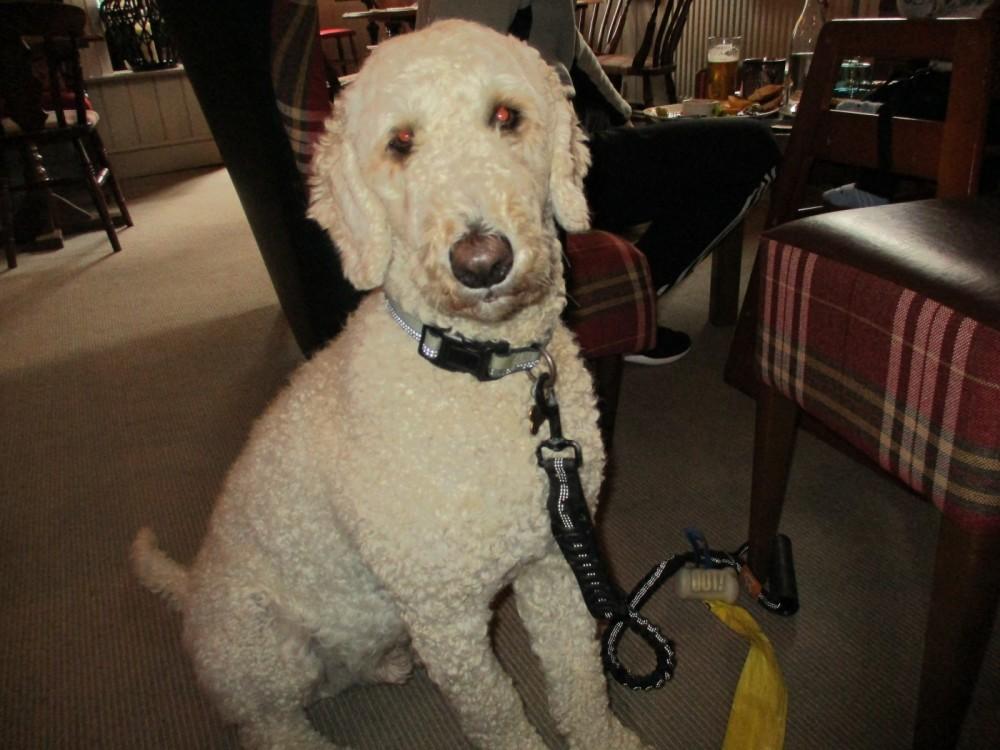 A35 Ridgeway dog walk and dog-friendly pub, Dorset - IMG_0403.JPG