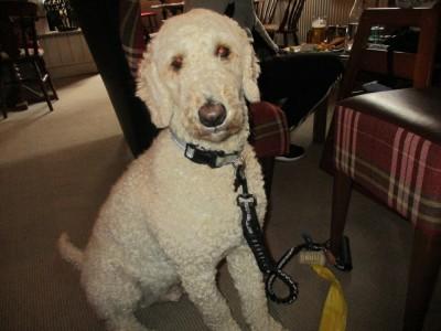 A35 Ridgeway dog walk and dog-friendly pub, Dorset - Driving with Dogs