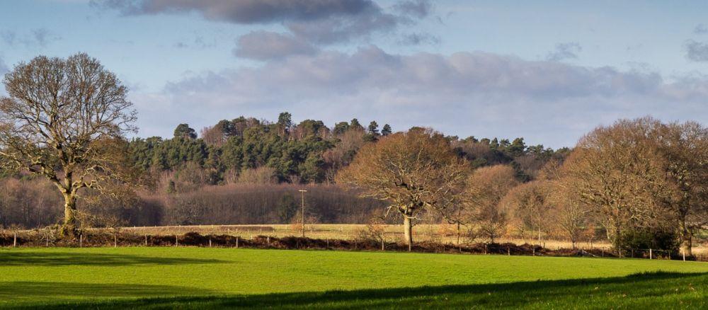 A286 dog walk near Godalming, Surrey - Surrey dog walk