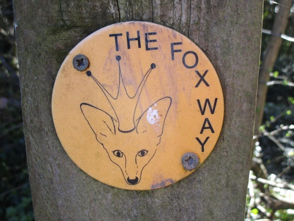 A25 dog walk near Albury, Surrey - Surrey dog walks.JPG
