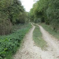 Ridgeway dog walk and a dog-friendly pub, Oxfordshire - Cotswold-dog-walk-and-pub.JPG