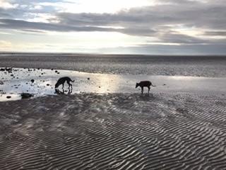 Powfoot Beach - dog-friendly, Scotland - 99137585-112D-43B1-9135-369AB13E4243.jpeg