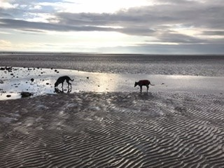 Powfoot Beach - dog-friendly, Scotland - 99137585-112D-43B1-9135-369AB13E4243.jpeg