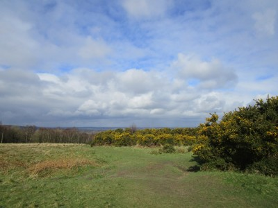 A22 forest dog walk near Nutley, East Sussex - Driving with Dogs