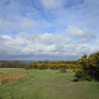 A22 forest dog walk near Nutley, East Sussex - East Sussex forest dog walks.JPG