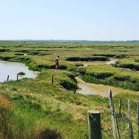 Stunning marshland dog walk and dog-friendly pub nearby, Essex - Dog walks in Essex.jpg