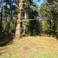 A walk with your dog in royal pawsteps, Norfolk - Sandringham dog walks