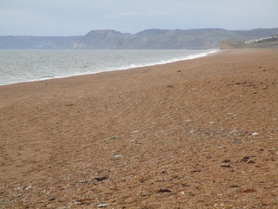 A35 Jurassic coast dog walk, Dorset - Driving with Dogs