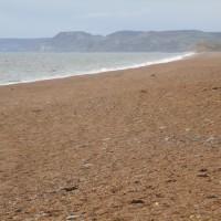 A35 Jurassic coast dog walk, Dorset - IMG_6605.JPG