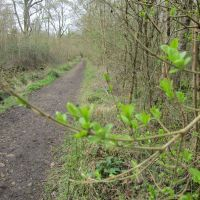 Woodland dog walk in the Colne Valley, Essex - IMG_1016.JPG