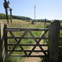 M40 Chilterns dog walk and dog-friendly pub, Oxfordshire - Chilterns dog walk with dog-friendly pub