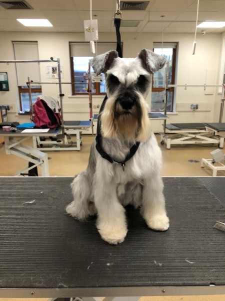 Molly in the grooming parlour at Hadlow.jpg