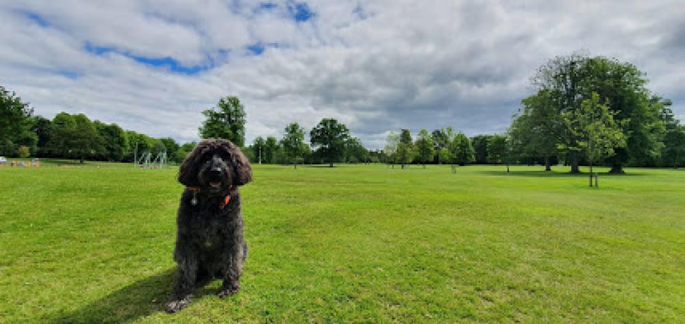 M77 Junction 3 dog walk near Glasgow, Scotland - 20190611_142335.jpg