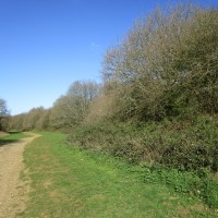 A25 Dog walk on the Downs near Guildford, Surrey - Surrey dog walks.JPG