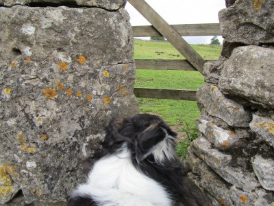 Castle dog walk and dog-friendly pub, Yorkshire - Driving with Dogs