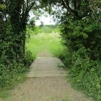 Heart of England Forest dog walk, Warwickshire - off-lead walks in Warwickshire.JPG