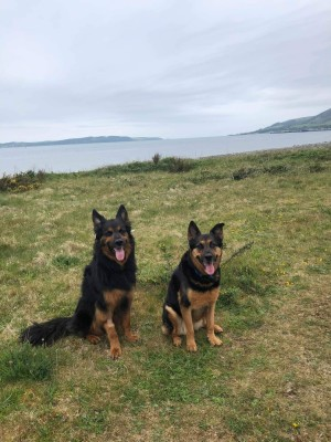 Beoch to Leffnol point dog walk, Scotland - Driving with Dogs