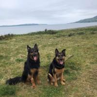 Beoch to Leffnol point dog walk, Scotland - received_614098529377926.jpeg