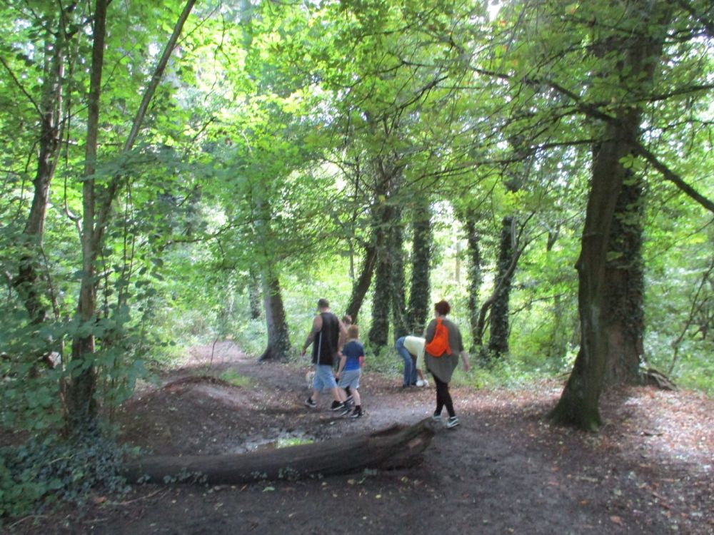 A419 country park dog walks and cafe near Swindon, Wiltshire - Wiltshire woodland dog walks.JPG