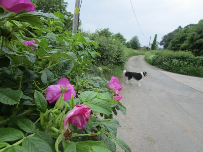 A50 heritage village and dog walk, Derbyshire - Driving with Dogs