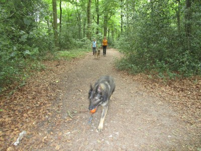 Stoke Row dog walk and dog-friendly pub, Oxfordshire - Driving with Dogs