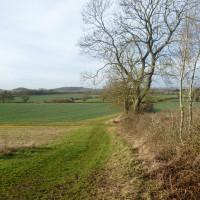 A46 near Stratford-upon-Avon dog-friendly pub and dog walk, Warwickshire - Dog walks in Warwickshire