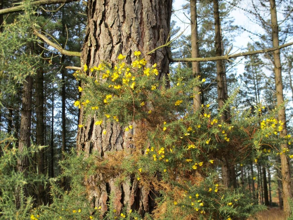 A35 Forest dog walk, Dorset - IMG_0055.JPG