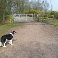 A449 heritage dog walk, Staffordshire - Dog walks in Staffordshire