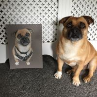 JCW Pet Portraits, Staffordshire - 7A766D4F-F57E-4D9C-8DF9-F19532CDB40B.jpeg