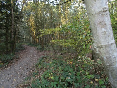 Quiet Forest dog walks, Kent - Driving with Dogs