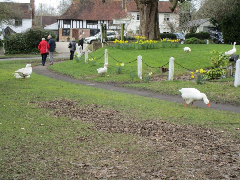 A21 dog-friendly pub and dog walk near Battle, East Sussex - Dog-friendly pubs with dog walks East Sussex.JPG