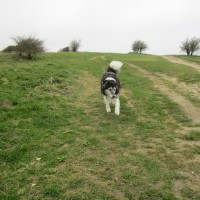 Common dog walks, East Sussex - Sussex dog-friendly pub and dog walk.JPG