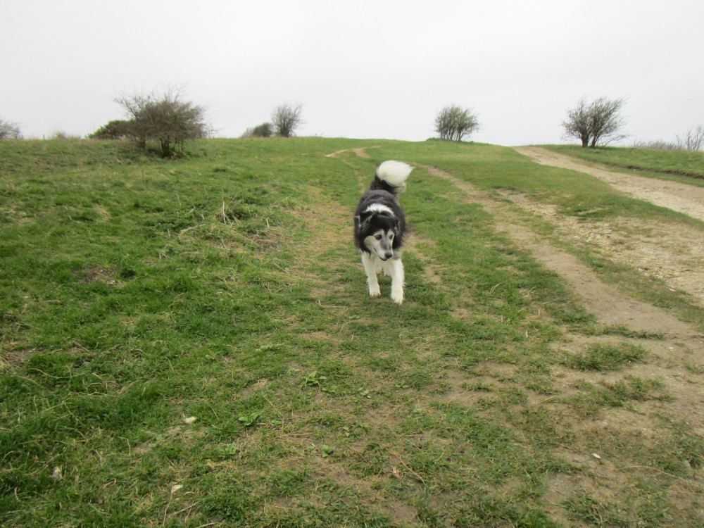 Ditchling Common dog walks, East Sussex - Sussex dog-friendly pub and dog walk.JPG