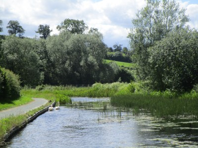 A483 dog walk and dog-friendly inn, Wales - Driving with Dogs