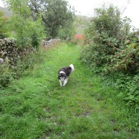 Moorland dog walk and dog-friendly pub, Yorkshire - Yorkshire dog-friendly pub and dog walk