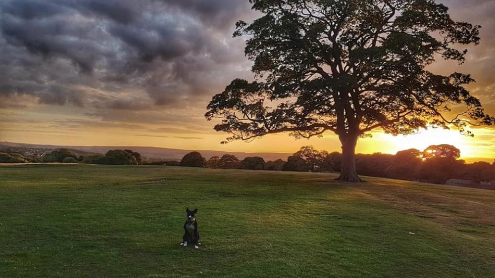 Sheffield dogwalking - Graves Park, Yorkshire - 40382392_10155372342126330_5210603922065981440_n.jpg