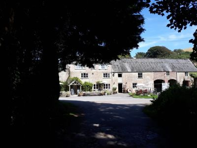 Dog-friendly tea rooms and short walk, Dorset - Driving with Dogs