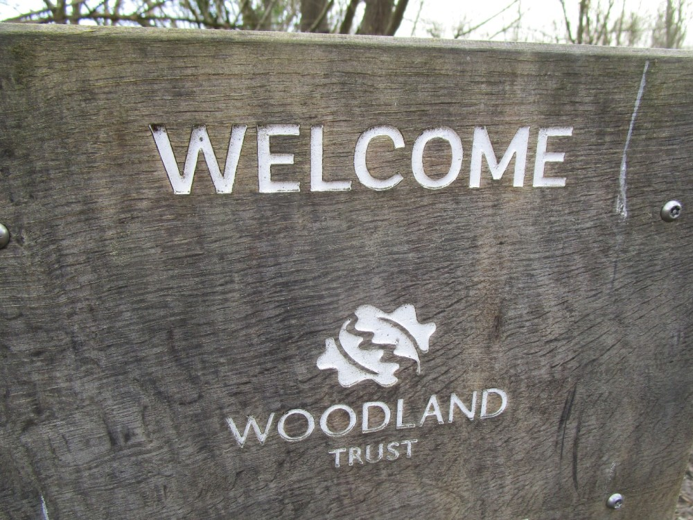 Woodland dog walk near Heathfield, East Sussex - Dog walks and dog-friendly pubs East Sussex.JPG