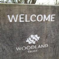 Woodland dog walk near Heathfield, East Sussex - Dog walks and dog-friendly pubs East Sussex.JPG