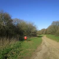 A25 Dog walk on the Downs near Guildford, Surrey - Surrey dog walks.JPG