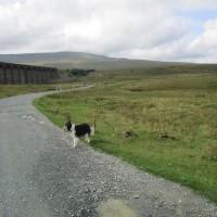Viaduct dog walk and dog-friendly pub, Cumbria - Yorkshire Dales dog-friendly pub and dog walk