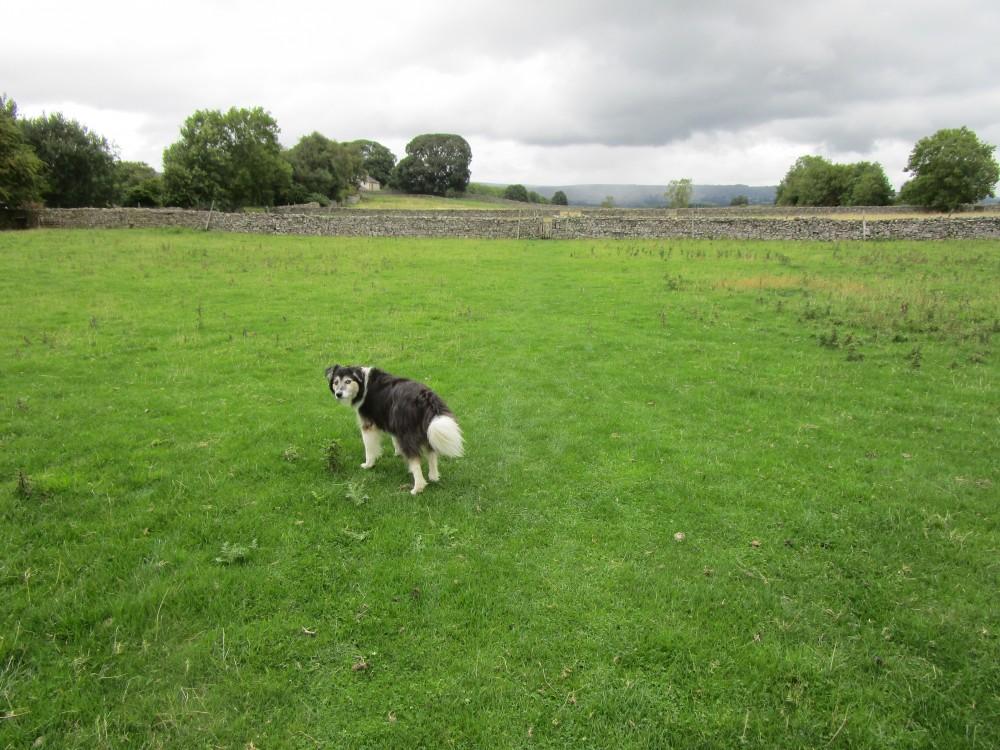 Wensleydale dog walks and dog-friendly B&B, Yorkshire - Yorkshire dog-friendly pub and dog walk