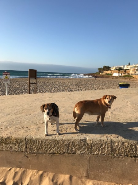 Early morning walk on the beach in Luz, Portugal