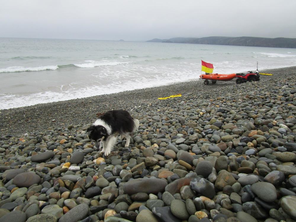 Newgale dog-friendly beach, Wales - Wales dog-friendly beach and dog walk